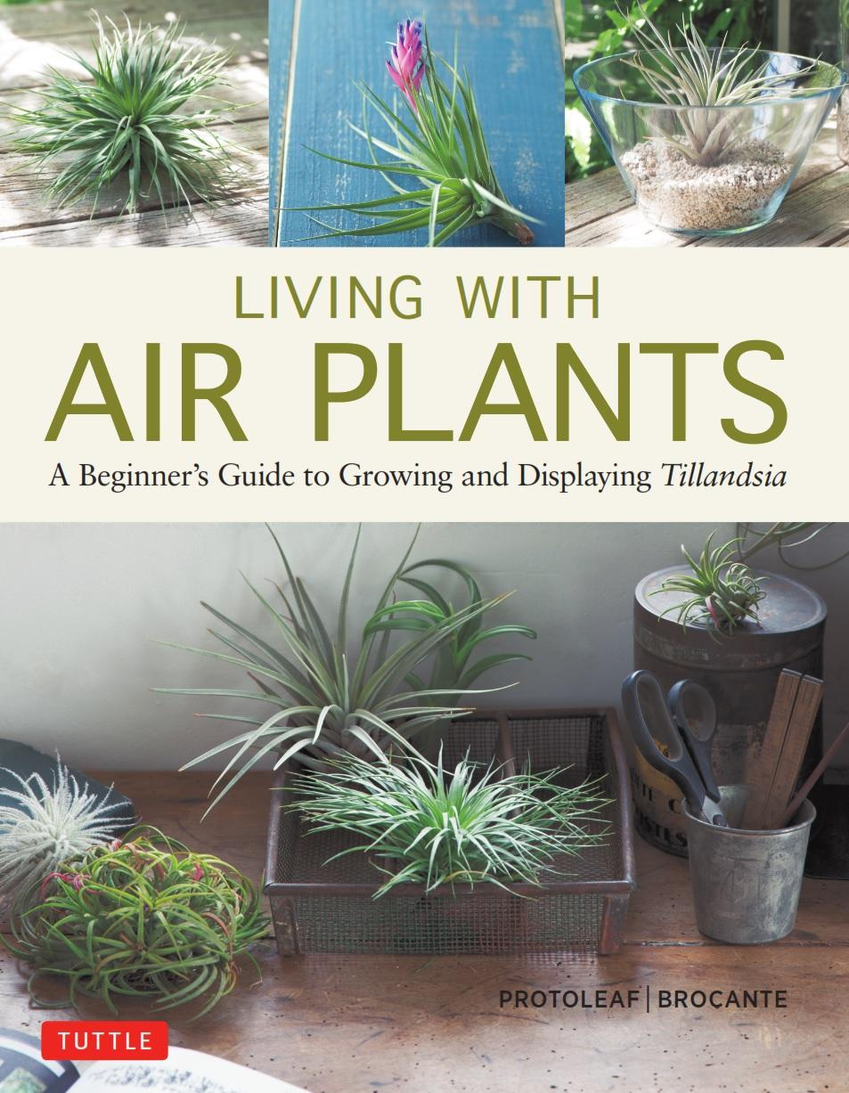 Living With Air Plants A Beginner S Guide To Growing And