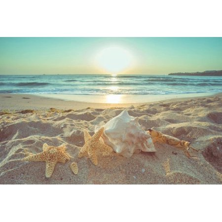 Starfish and Shells on the Beach at Sunrise Coastal Ocean Seascape Landscape Photography Print Wall Art By Deyan (Brown Starfish)