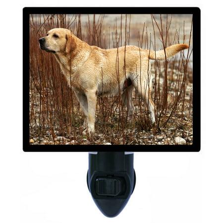 Night Light - Photo Light - Yellow Lab - Labrador Retriever - Dog
