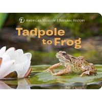 Tadpole to Frog (Board Book)