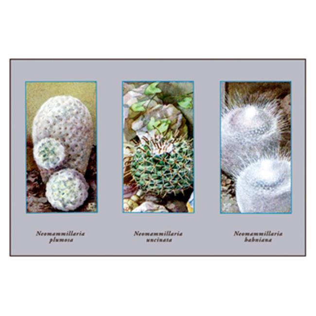 Buy Enlarge 0-587-10284-5P20x30 Neomammillaria Plumosa- Paper Size P20x30