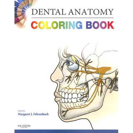 Dental Anatomy Coloring Book - Walmart.com