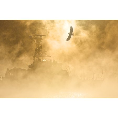 Bald Eagle Soars Over Auke Bay Harbor With Ice Fog Obscuring Docked Vessel At Juneau Alaska Composite Canvas Art - John Hyde  Design Pics (17 x 11) 95 Ice Grey Vessels