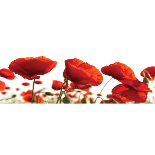 Selections by Chaumont ''Red Poppies'' Photographic Print