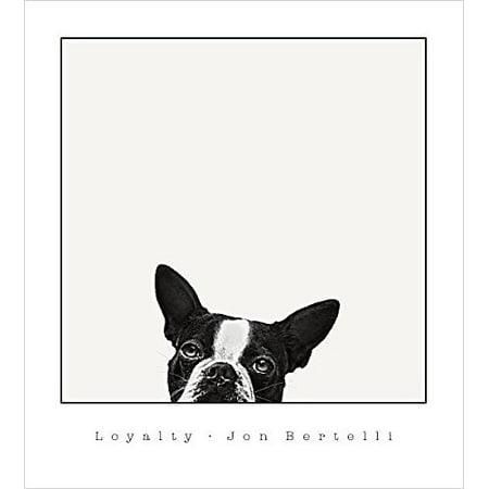 Loyalty Boston Terrier by Jon Bertelli 20x18 Art Print Poster Photograph Dog Head Looking Up Peeking