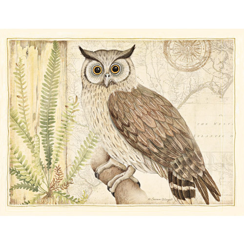 Owl Boxed Note Cards