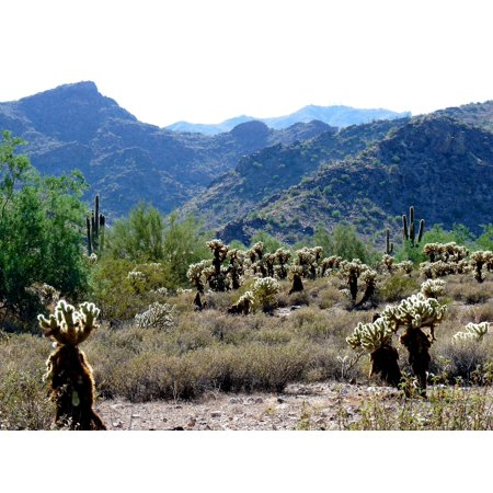 LAMINATED POSTER The image represents some Sonoran Desert vegetation at White Tank Mountains Regional Park. Poster Print 24 x 36 (Desert Mountain Park Halloween)