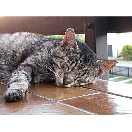 Canvas Print Pet Sleeping Tomcat Soot Cat Cat Face Animals Stretched Canvas 32 x (Beretta 3032 Tomcat 32 Acp For Sale)