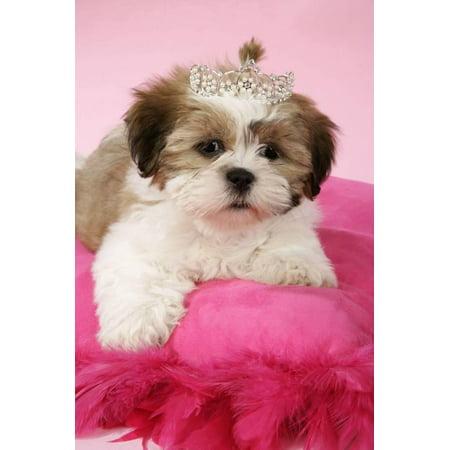 Shih Tzu 10 Week Old Puppy On Pink Cushion Print Wall Art Walmartcom