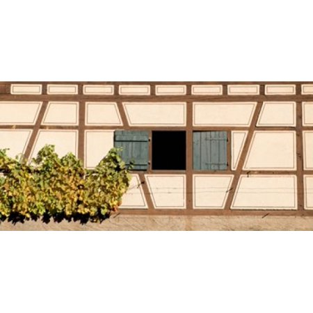 - Detail of half timber house and grape vines Strumpfelbach Baden-Wurttemberg Germany Poster Print