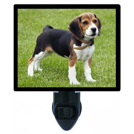 Night Light - Photo Light - Beagle Puppy - Dog