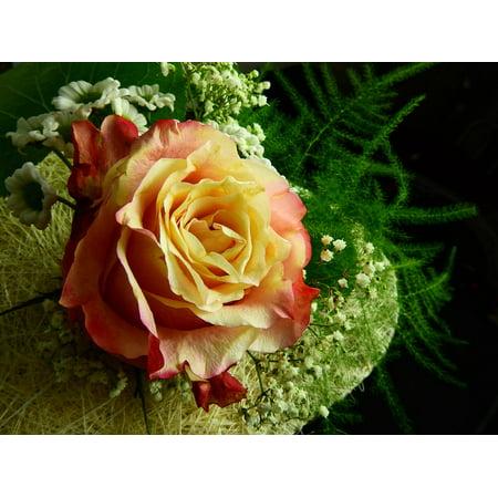 LAMINATED POSTER Rose Blossom Heart Bloom Love Flower Poster Print 24 x 36