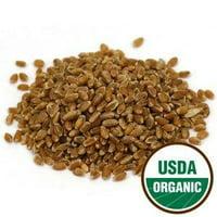 3 Pack - Wheat Grass Sprouting Seeds Organic - Agropyron elongatum, 1 lb