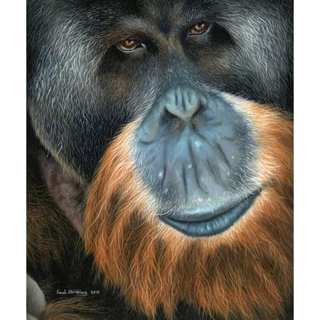 Orangutan portrait Poster Print by Sarah Stribbling (Orangutan Portrait)