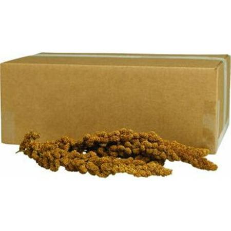 Gold Millet Spray Bulk 125 Count -