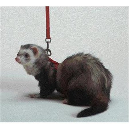 Ferret Harness And Lead Combo- Red 48 Inches - - Fp Pro Harness