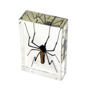 Ed Speldy East Company DD33 Real Bug Desk Decoration, Golden Orb Spider, Large
