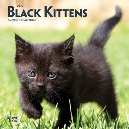 2020 Black Kittens Mini Wall Calendar,  by BrownTrout (Kittens 2010 Calendar)