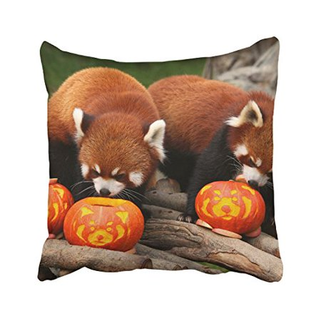 WinHome Raccoon And Pumpkins Happy Thanksgiving Halloween Decorative Pillowcases With Hidden Zipper Decor Cushion Covers Two Sides 18x18 inches (Nz Halloween Date)