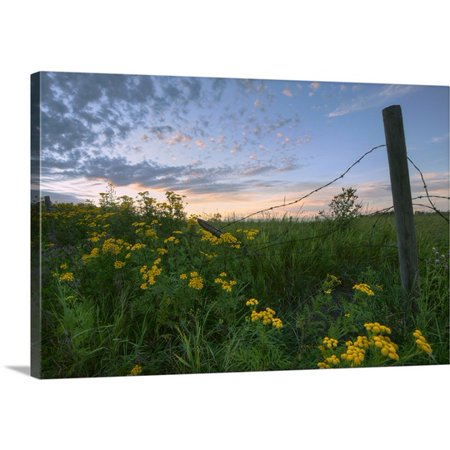 Great Big Canvas Dan Jurak Premium Thick Wrap Canvas Entitled A Summer Evening Sky With Yellow Tansy Flowers And Fence  Alberta  Canada