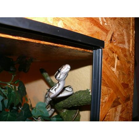 Canvas Print Snake Animal Exotic Mojave Terrarium Phyton Stretched Canvas 10 x 14