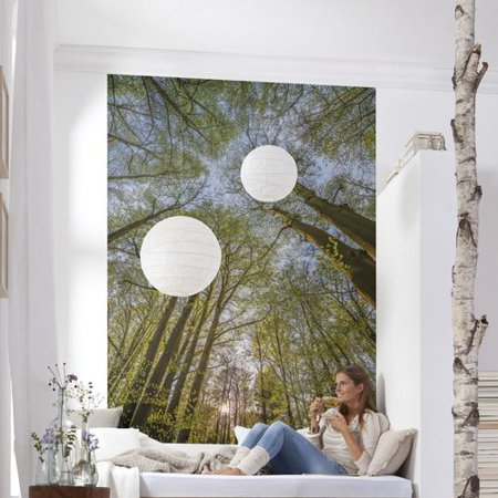 Brewster home fashions komar canopy wall mural for Brewster wall mural