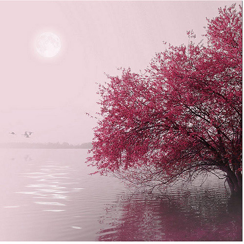 "Trademark Art ""Full Moon on the Lake"" Canvas Art by Philippe Sainte-Laudy"