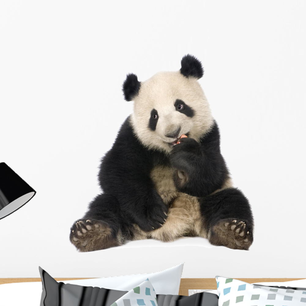 Giant Panda 18 Months Wall Decal By Wallmonkeys Peel And Stick