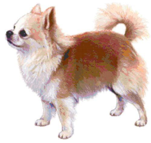 Chihuahua Dog Counted Cross Stitch Pattern