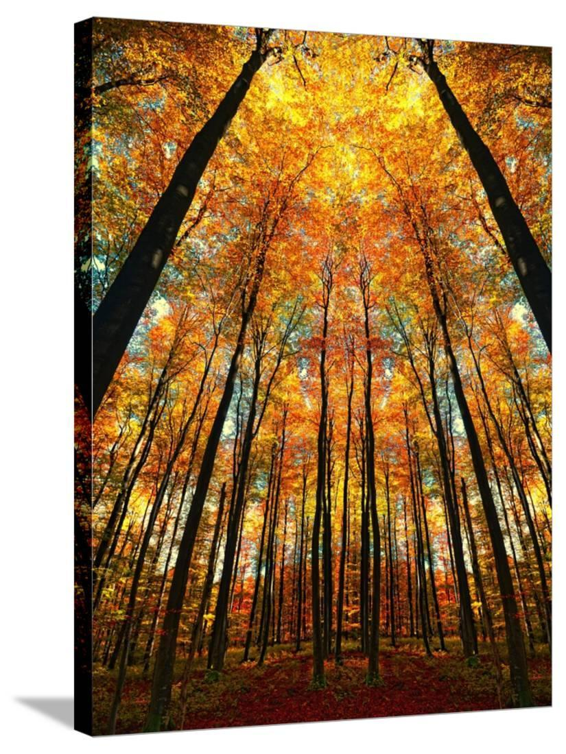 Cathedral Fall Botanical Scenic Seasons Gallery Wrapped Canvas Print Wall Art By Philippe Sainte Laudy Walmart Com Walmart Com