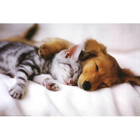 Cuddles (Sleeping Puppy and Kitten) Art Poster Print Poster - - Puppy Posters