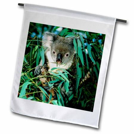 Image of 3dRose Australia, Rockhampton, koala bear, eucalyptus-AU01 CMI0026 - Cindy Miller Hopkins - Garden Flag, 12 by 18-inch