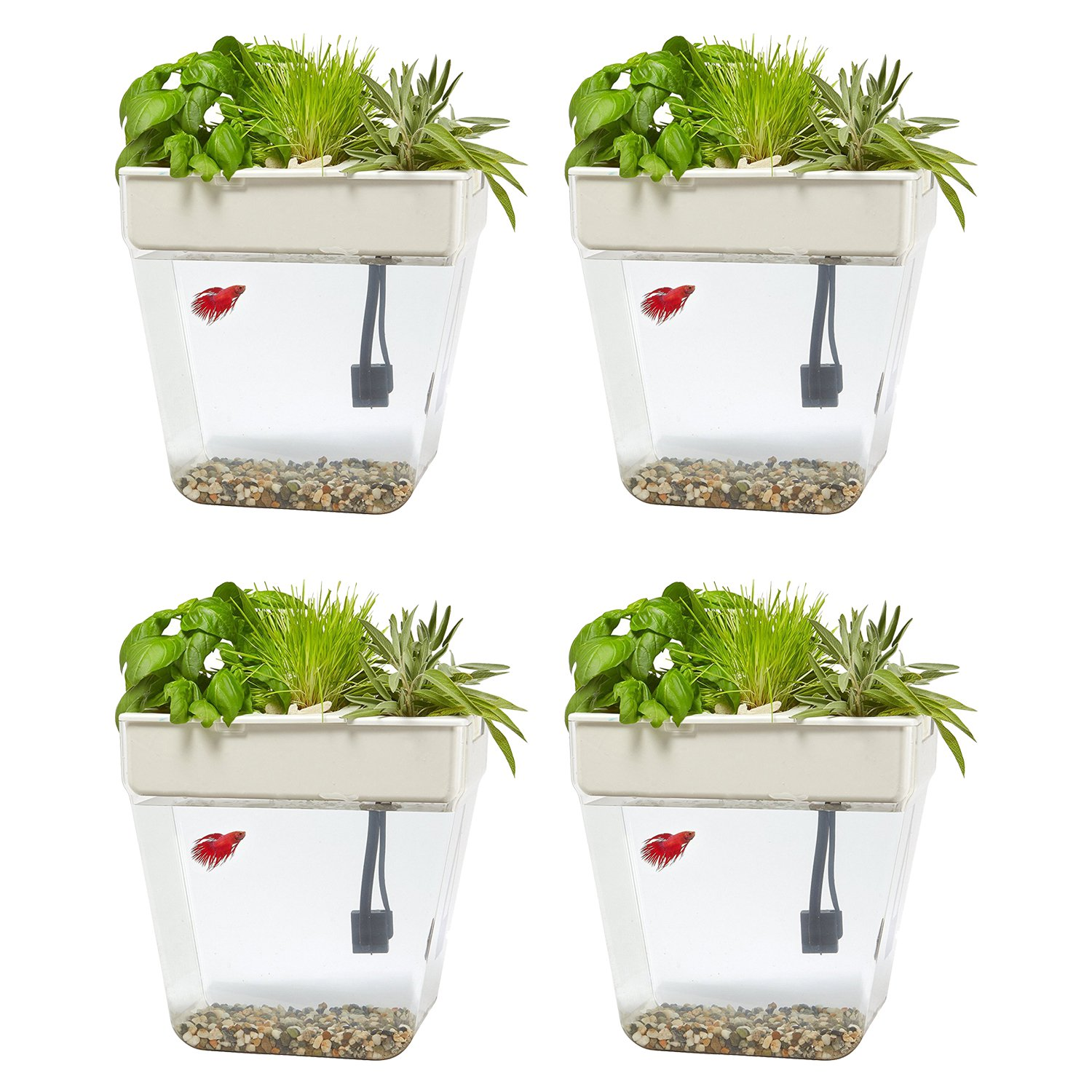 Back to the Roots 3 Gal. Self-Cleaning Aquaponic Water Garden Fish Tank, 4 Pack