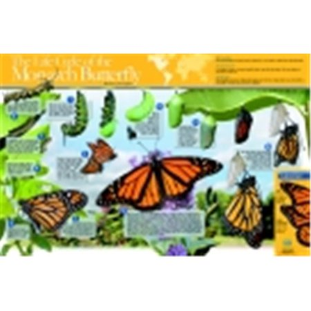Butterfly Life Cycle Craft (Neo Sci 35 W x 23 H in. Monarch Butterfly Life Cycle Laminated Poster, Grade)
