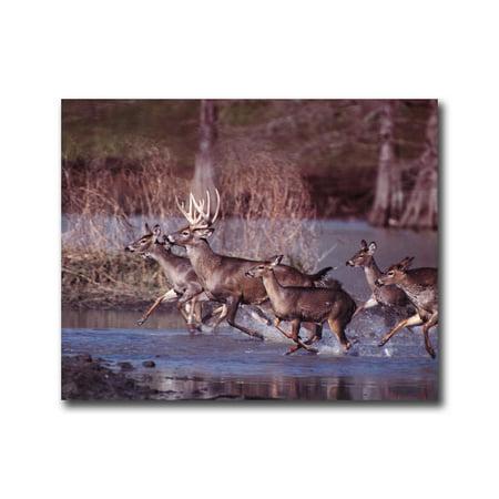 Buck Deer Running In Lake Wildlife Wall Picture Art Print