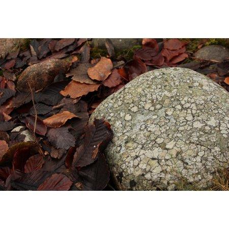 LAMINATED POSTER Autumn Orange Stone Brown Leaf Fallen Leaves Poster Print 24 x 36