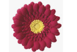 Cake Decoration Gum Paste Gerbera Dasiy- Marron