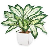 "Faux Dieffenbachia Artifical Potted Plant with Ceramic Base, Tabletop 13 - 3/4""H"