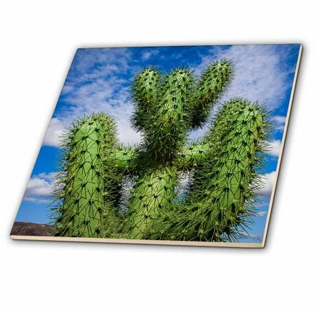 3dRose Spain, Canary Islands, cactus - Ceramic Tile, 12-inch ()