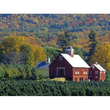 Christmas Tree Farm near Springfield in Autumn, Vermont, USA Print Wall Art By Julie -