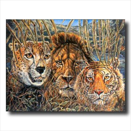 African Phases Cat Lion Tiger Wall Picture Art Print