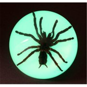 Ed Speldy East SS106 Large Dome Paper Weight with Real Tarantula in Acrylic Glow in the Dark in Acrylic