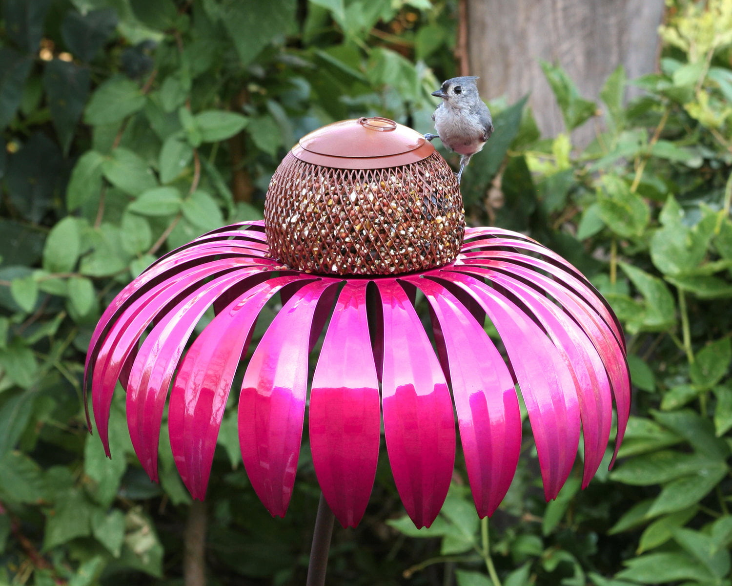 Coneflower Birdfeeder by Desert Steel
