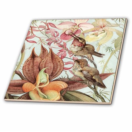 3dRose Catasetum and Cypridediums by Edward J. Detmold Orchid and Hummingbirds - Ceramic Tile, 6-inch