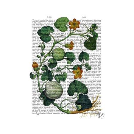 Squash Vine (Squash Vine 2 Print Wall Art By Fab)