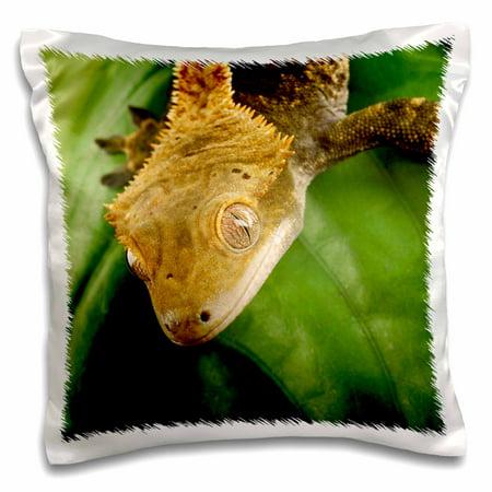 Lizard Pillow (3dRose New Caledonian Crested Gecko lizard - NA02 MPR0089 - Maresa Pryor - Pillow Case, 16 by 16-inch )