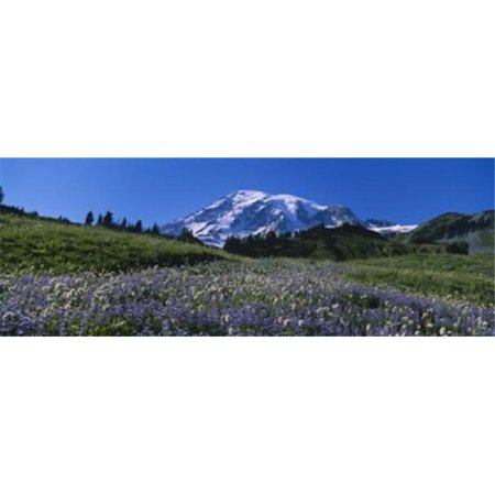 Wildflowers On A Landscape  Mt Rainier National Park  Washington State  USA Poster Print by  - 36 x