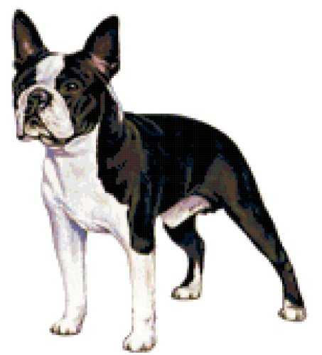Boston Terrier Dog Counted Cross Stitch Pattern