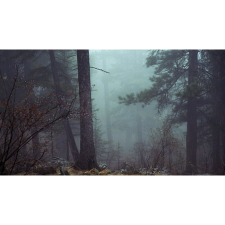 Peel-n-Stick Poster of Trees Forest Atmospheric Mystic Dark Scary Misty Poster 24x16 Adhesive Sticker Poster - Scary Trees