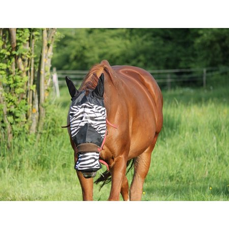 LAMINATED POSTER Head Fly Protection Fly Protection Horse Fly Mask Poster Print 24 x 36